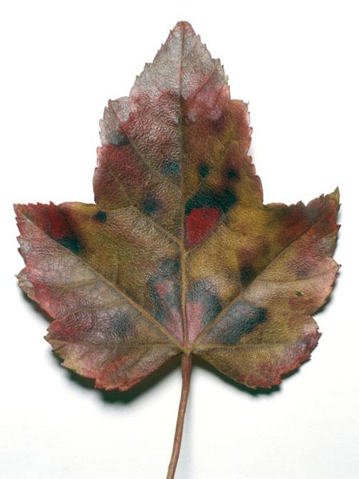 leaf_014